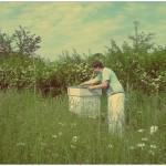 Bienen und Jugendhilfe